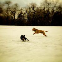 080304-IMG_7594-playdogs