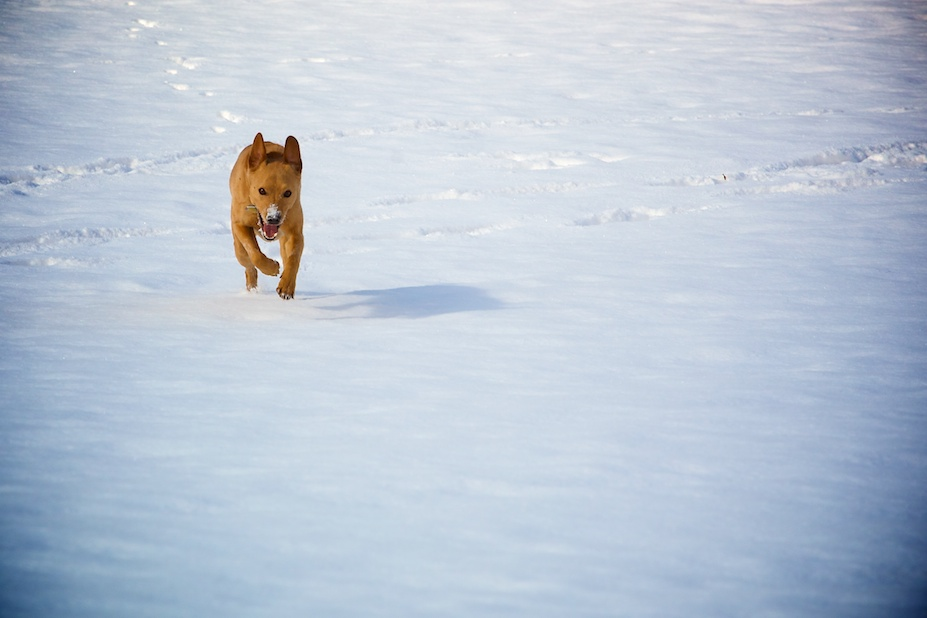 Chuck Running, With Snow Nose Phenomenon