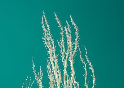 White Against Sky - Stuff White Trees Like | Blurbomat.com