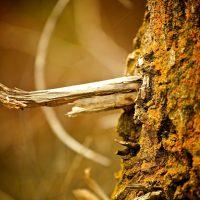 Wooden | Blurbomat.com
