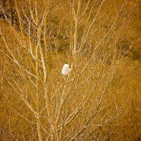 Bag In Tree - Salt Lake City, Utah | Blurbomat.com