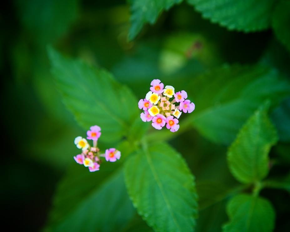 Very Tiny Flowers