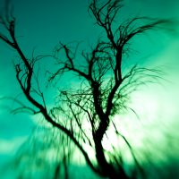 Lensbaby: Melting Tree | Blurbomat.com