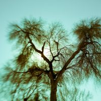 A tree, winter, late afternoon by Jon Armstrong Photography for blurbomat.com