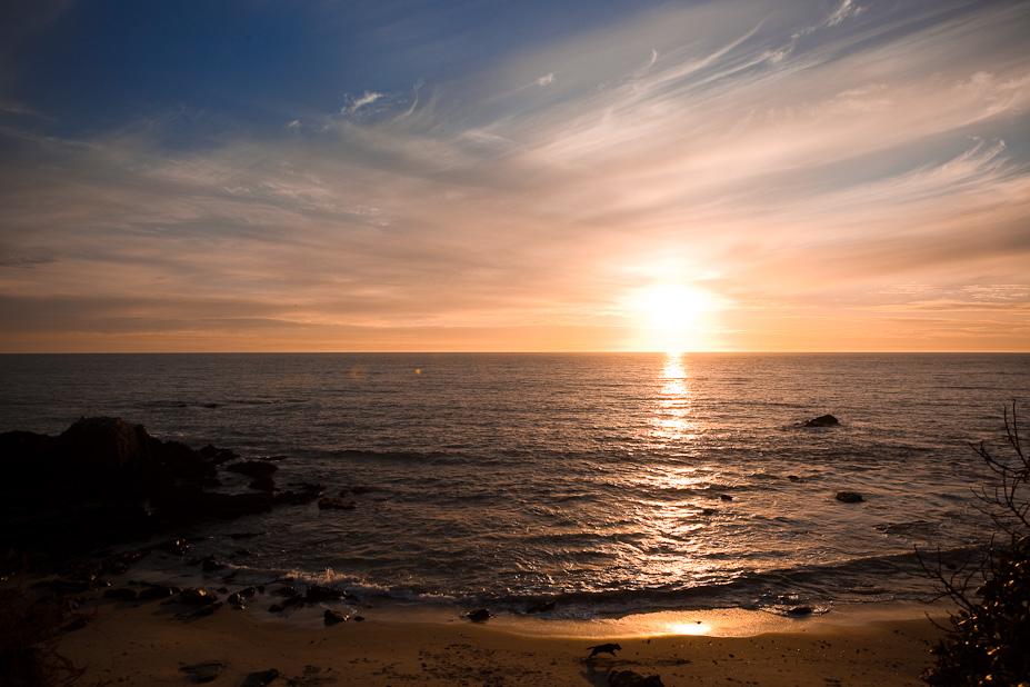 Happy Puppy – Sunset in Laguna Beach