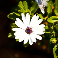 Leta's Favorite Flower on Our Walk - Laguna Beach, California | Blurbomat.com