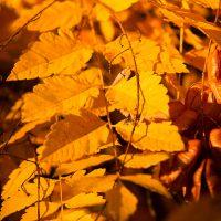 Slow Death of Autumn | Blurbomat.com