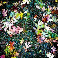 autumnfloor by Jon Armstrong.