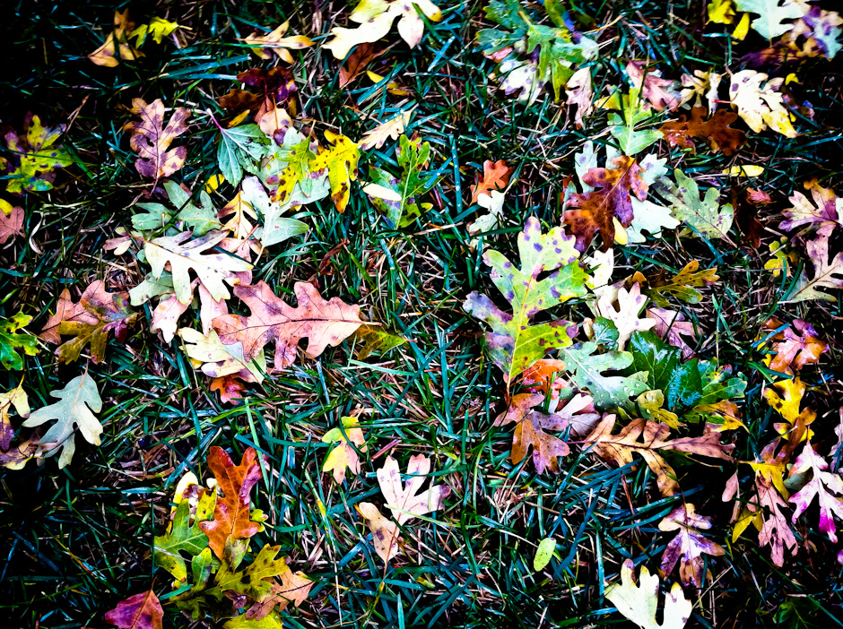 Autumn Floor
