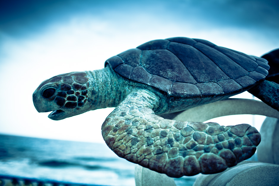 The Daydream of the Awake Blue Turtle