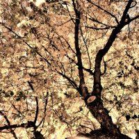 Bleached Autumn | Blurbomat.com