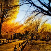 Central Park in Fall | Blurbomat.com