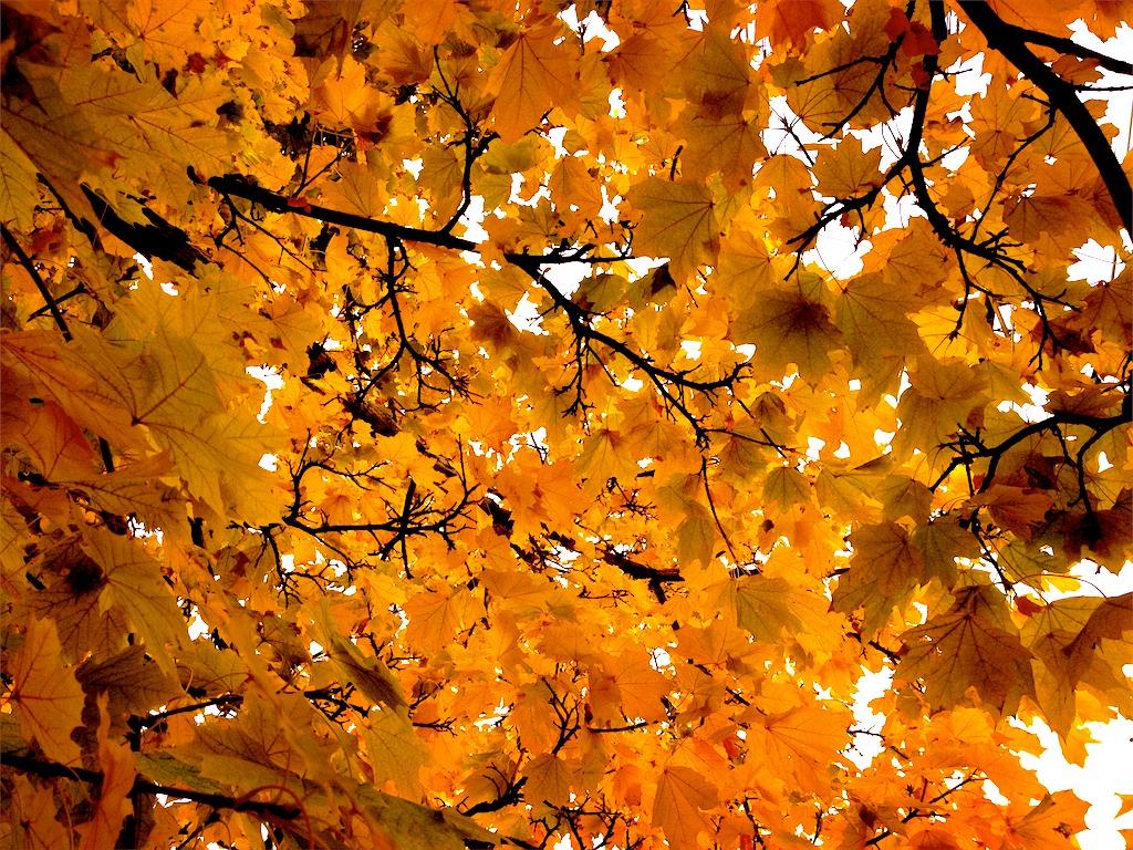 Requiem for Autumn