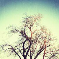 Snap seeded Trees | Blurbomat.com