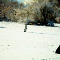 Coco Waits | Blurbomat.com