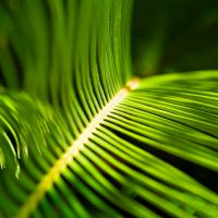Palm Frond - A Palm Of Some Kind - Destin, Florida | Blurbomat.com