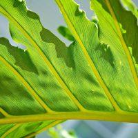 Macro Leaf - Leafy Greens - Destin, Florida | Blurbomat.com