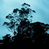 The Trees of Golden Gate Park | Blurbomat.com