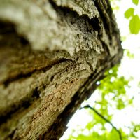 Bark - Arboretum, near Knoxville, Tennessee | Blurbomat.com
