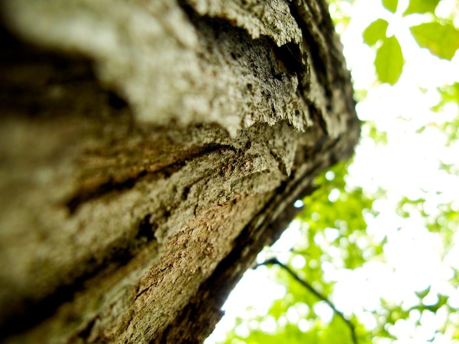 Jon Armstrong - Blurbomat - Bark