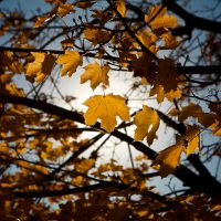 Sunlit Leaf | Blurbomat.com