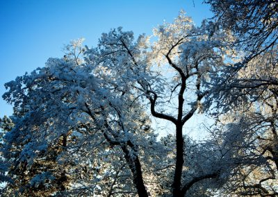 Crisp Winter Morning | Blurbomat.com
