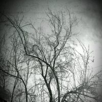 B&W Tree | Blurbomat.com