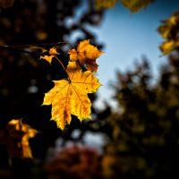 Crispy Leaf Not Crispy Air | Blurbomat.com