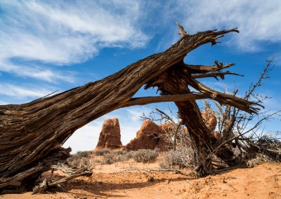 Weathered and Winded - Arches National Park | Blurbomat.com