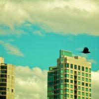 Dark Bird - Vancouver, Canada | Blurbomat.com