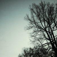Frozen Tree | Blurbomat.com