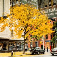 Autumn in Tribeca | Blurbomat.com
