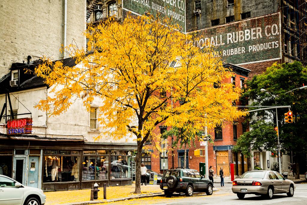 Autumn in Tribeca