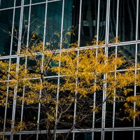 Blurbomat - Jon Armstrong - Gold and Green - 2012, autumn, Blurbomat, Canon 5D Mark III, Canon EF 24-105mm f/4.0 L IS USM, Jon Armstrong blog, Jon Armstrong Photography, leaves, Manhattan, New York, New York City, personal travel, reflection, yellow