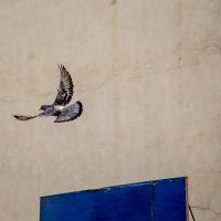 Manhattan Pigeon | Blurbomat.com