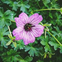 Purple Flower | Blurbomat.com