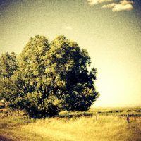Pastoral Road Tree | Blurbomat.com