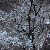 Dramatic Monochrome Autumn Leaves | Blurbomat.com