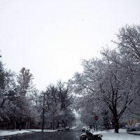 White Cold Beauty | Blurbomat.com