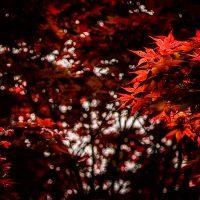 Red Butterflies and Moths | Blurbomat.com