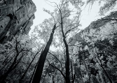 Looking Up in Zion National Park | Blurbomat.com