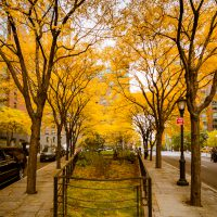 Lower Manhattan Yellow Canopy | Blurbomat.com