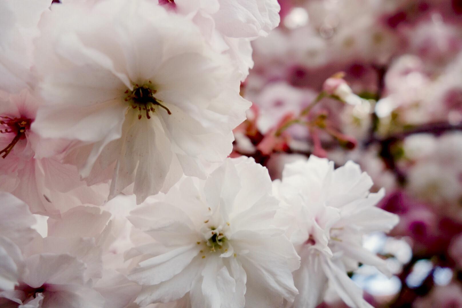 Springing