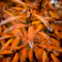 Turning, an autumn photo of orange leaves dying off by Jon Armstrong | Blurbomat.com