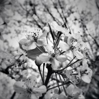 Black and White Blooms | blurbomat.com