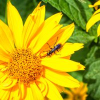 Macro shot of a bug on a yellow flower at the height of summer, 2016. | shot by Jon Armstrong for Blurbomat.com